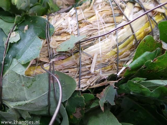 herfstkrans maken van het blad van de hollandse eik