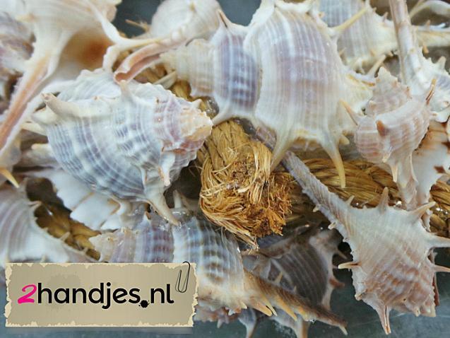 detailfoto thorn schelpen